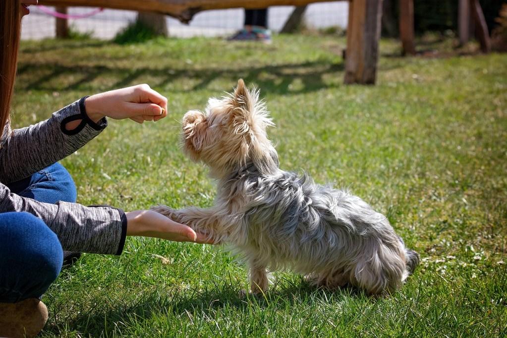 dog training, dog, animal