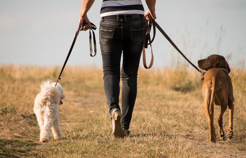 dog, walk, animal