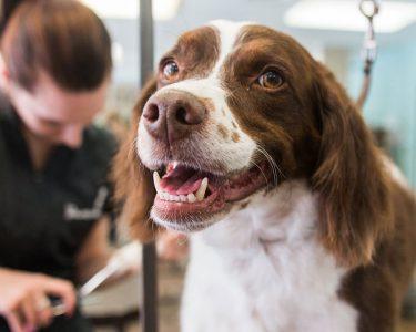 dog-grooming-winnipeg-1