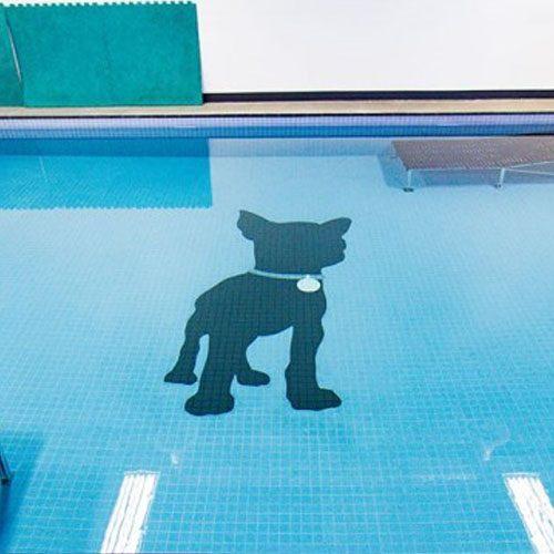 pawsh-facility-pool